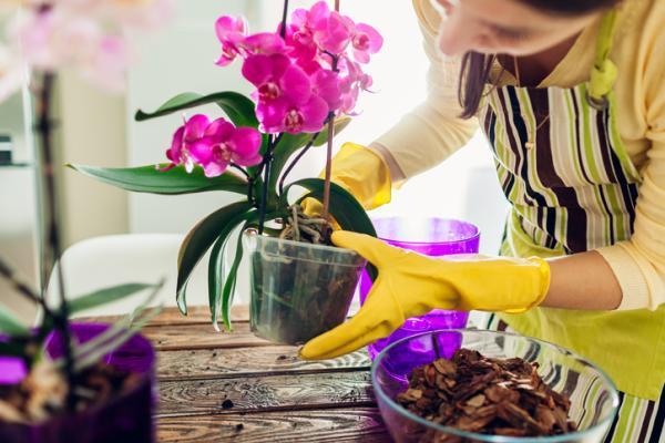 Cómo cuidar las orquídeas - Macetas para orquídeas