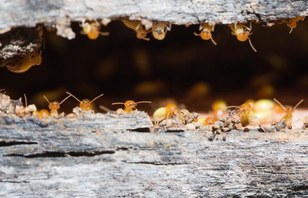 7 insectos que comen madera