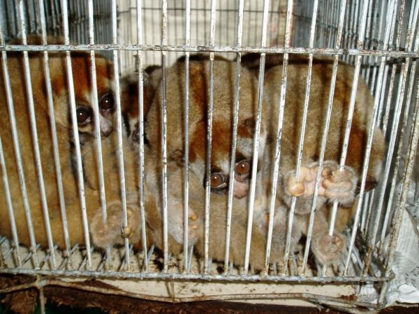 Cómo cuidar el ecosistema - Control del tráfico ilegal de especies