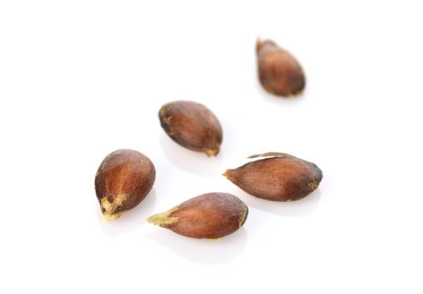 Germinar semillas de manzana: cómo hacerlo y cuidados - Cómo germinar semillas de manzana