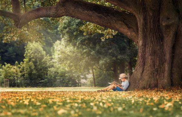 Beneficios de los árboles - Los árboles protegen de los rayos UV del sol