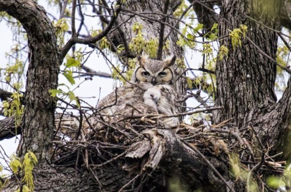 Beneficios de los árboles - Los árboles protegen y dan cobijo a los animales