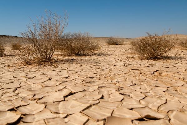 Desertización: qué es, causas y consecuencias - Diferencia entre desertificación y desertización