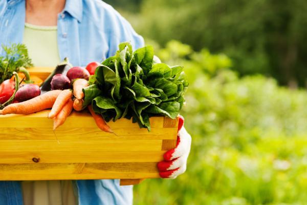 Cómo saber que un producto es ecológico - ¿Qué significa un certificado ecológico?