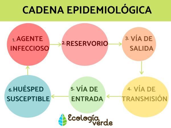 Triada ecológica: definición, elementos y ejemplos - Qué es la cadena epidemiológica