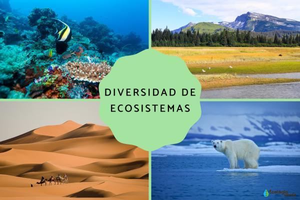 Diversidad de ecosistemas: qué es y ejemplos