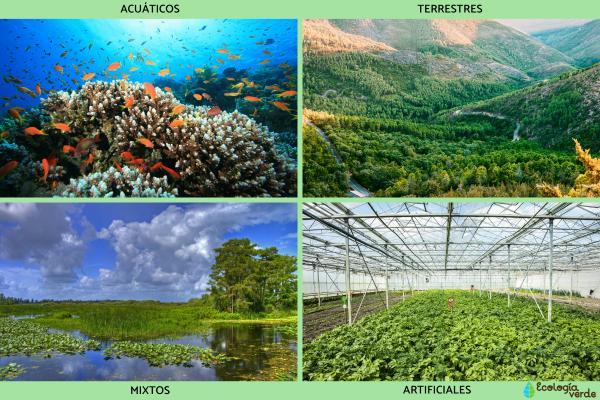 Diversidad de ecosistemas: qué es y ejemplos - Tipos de ecosistemas