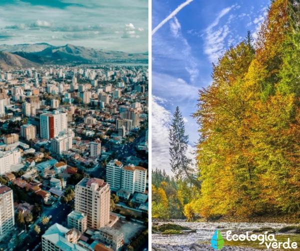 Ecosistema artificial: qué es y ejemplos - Diferencias entre ecosistema artificial y natural