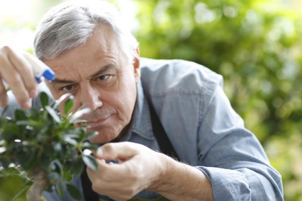Regar un bonsái: cuándo y cómo hacerlo - Cómo regar un bonsai - paso a paso