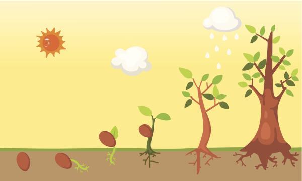 Cuánto tarda en crecer un árbol