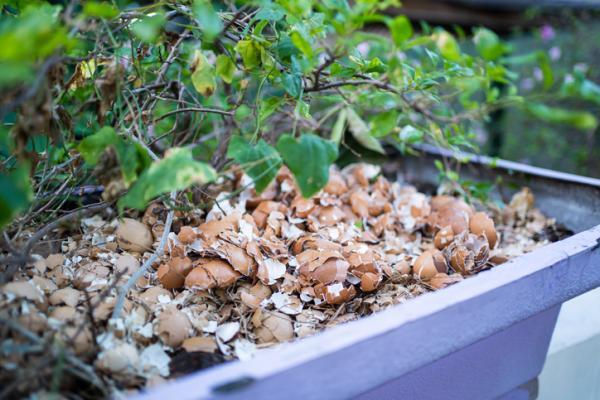 Cáscara de huevo para las plantas: para qué sirve y cómo usarla - Para qué sirve la cáscara de huevo en las plantas