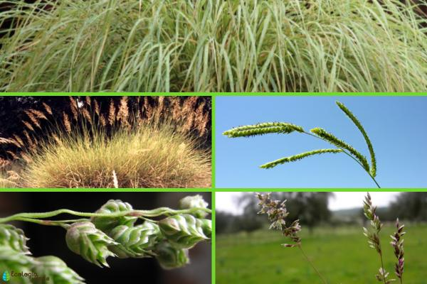 Región pampeana: características, flora y fauna - Flora de la región pampeana