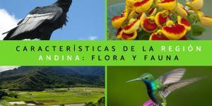 Región Andina: características, flora y fauna