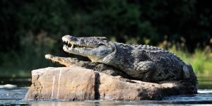 Cuáles son los animales más peligrosos del mundo
