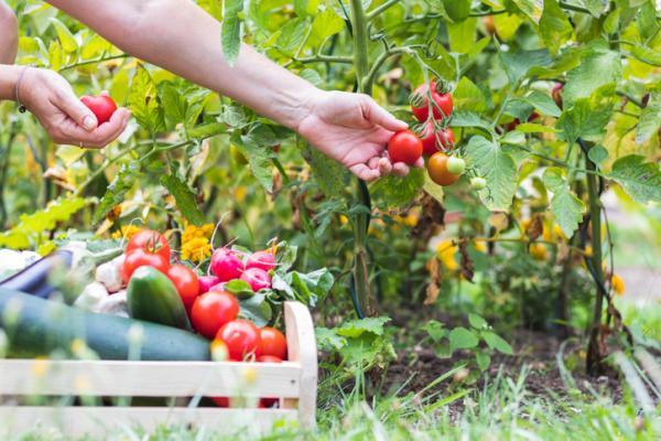Alimentación sostenible: qué es y cómo lograrla - Qué es la alimentación sostenible