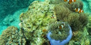 Cuáles son los ecosistemas acuáticos de agua salada