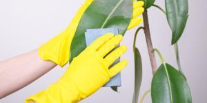 Cómo limpiar las hojas de las plantas
