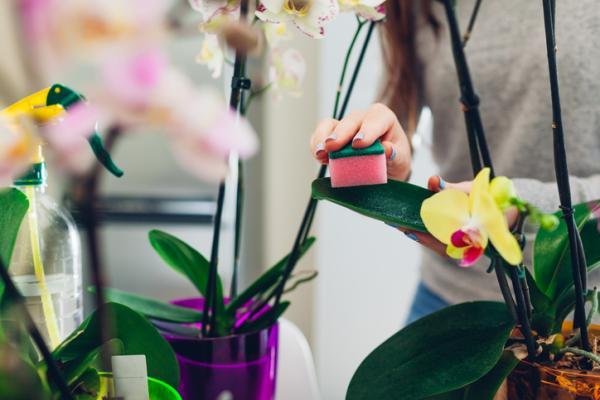 Cómo limpiar las hojas de las plantas - Por qué hay que limpiar las hojas de las plantas