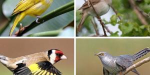13 pájaros que cantan