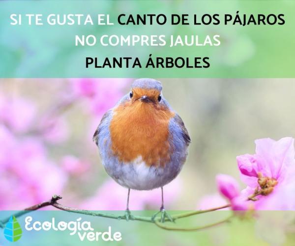 13 pájaros que cantan - No enjaules a los pájaros