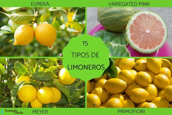 Tipos de limoneros