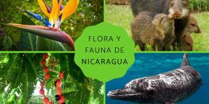 Flora y fauna de Nicaragua