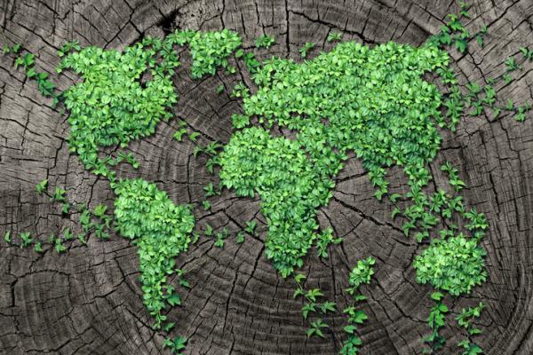 Historia de la ecología - Qué es la ecología - concepto y definición