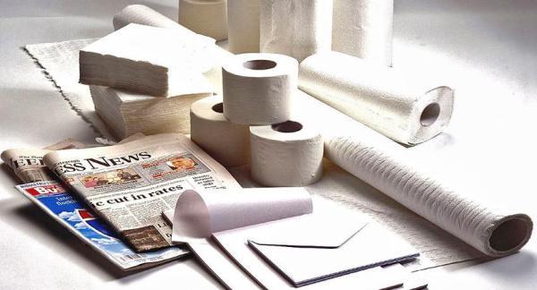 Cuál es el impacto ambiental del consumo de papel - Adiós a los árboles por el consumo de papel
