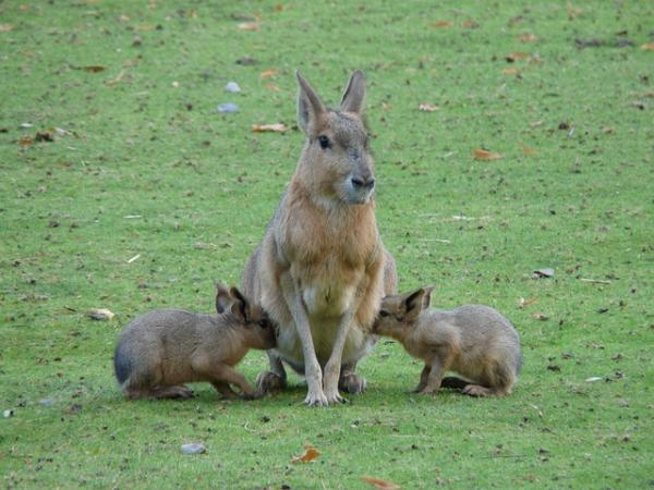 Características de los animales mamíferos para niños - Qué son los mamíferos: definición para niños