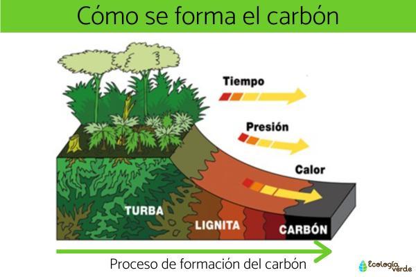 Cómo se forma el carbón