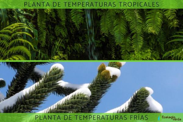 Adaptaciones de las plantas: tipos y ejemplos - Adaptaciones de las plantas a la temperatura
