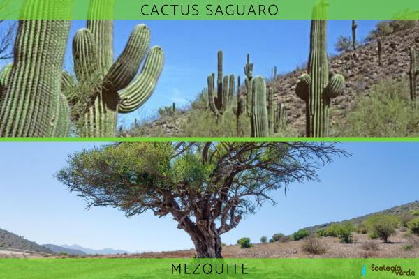 Adaptaciones de las plantas: tipos y ejemplos - Adaptaciones de las plantas en el desierto y ejemplos