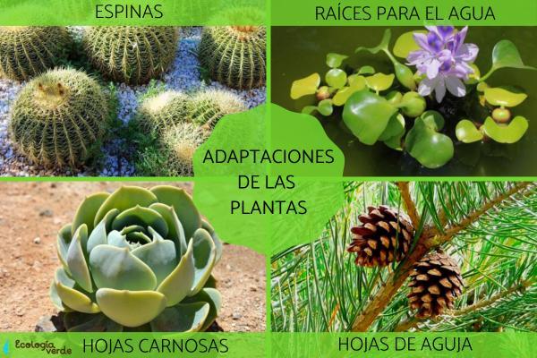 Adaptaciones de las plantas: tipos y ejemplos