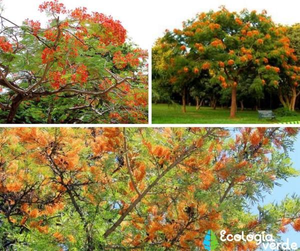 18 árboles con flores - Árboles con flores naranjas