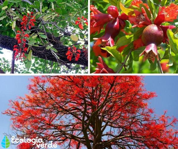 18 árboles con flores - Árboles con flores rojas