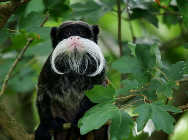 Animales en peligro de extinción en Bolivia