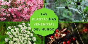 Cuáles son las plantas más venenosas del mundo