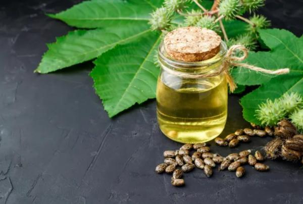 Cuáles son las plantas más venenosas del mundo - Ricino o higuera infernal