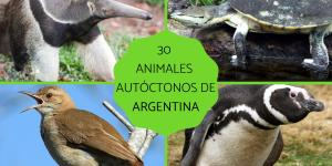 Animales autóctonos de Argentina