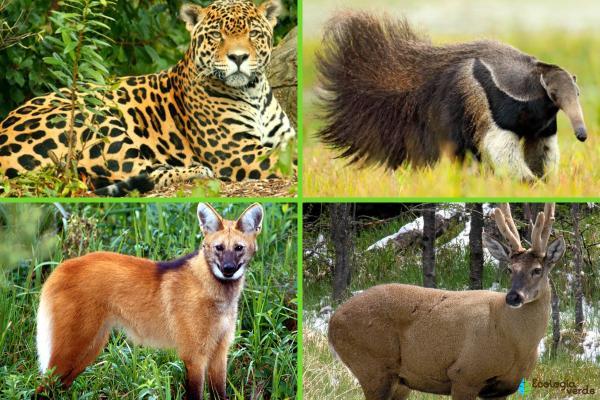 Animales autóctonos de Argentina - Animales autóctonos de Argentina en peligro de extinción