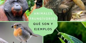 Animales frugívoros: características y lista de ejemplos
