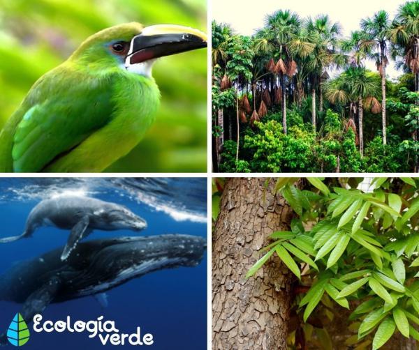 Biodiversidad en el Perú: características e importancia - Biodiversidad en el Perú: características, flora y fauna