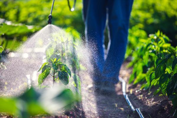 Leche para las plantas: beneficios y cómo usarla - Leche como fertilizante
