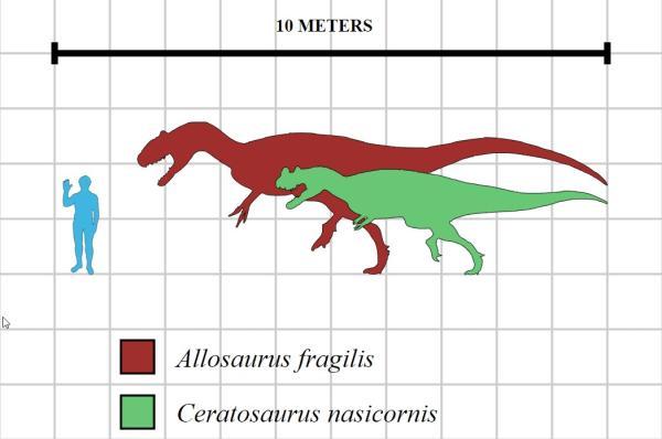 Dinosaurios carnívoros: nombres, tipos, características e imágenes - Allosaurus o alosaurio: características