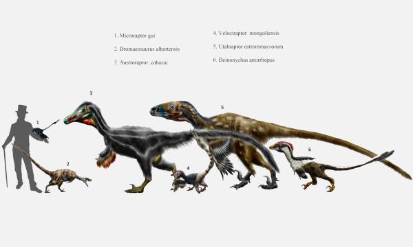 Dinosaurios carnívoros: nombres, tipos, características e imágenes - Ejemplos de dinosaurios carnívoros: Velociraptor y sus características