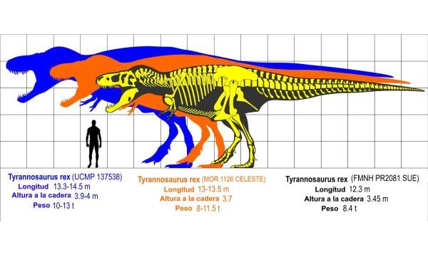 Dinosaurios carnívoros: nombres, tipos, características e imágenes - Tyrannosaurus rex o tiranosaurio rex: características