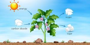 Nutrición de las plantas: proceso