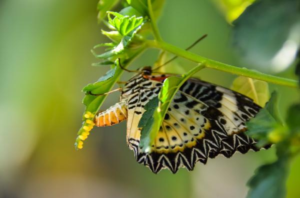 Elciclo de vida de una mariposa: etapas e imágenes - Primera fase del ciclo de las mariposas: el huevo