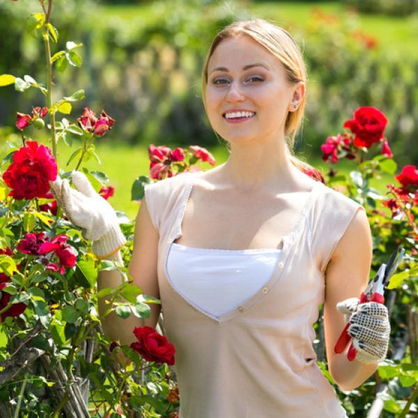 Plantar Esquejes De Rosal Preparación Y Cómo Hacerlo