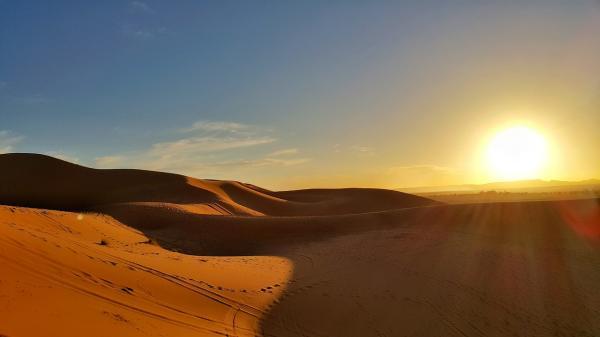 Animales del desierto: características y nombres - ¿Hay animales en el desierto?
